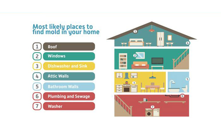 Mold Areas In Your Home